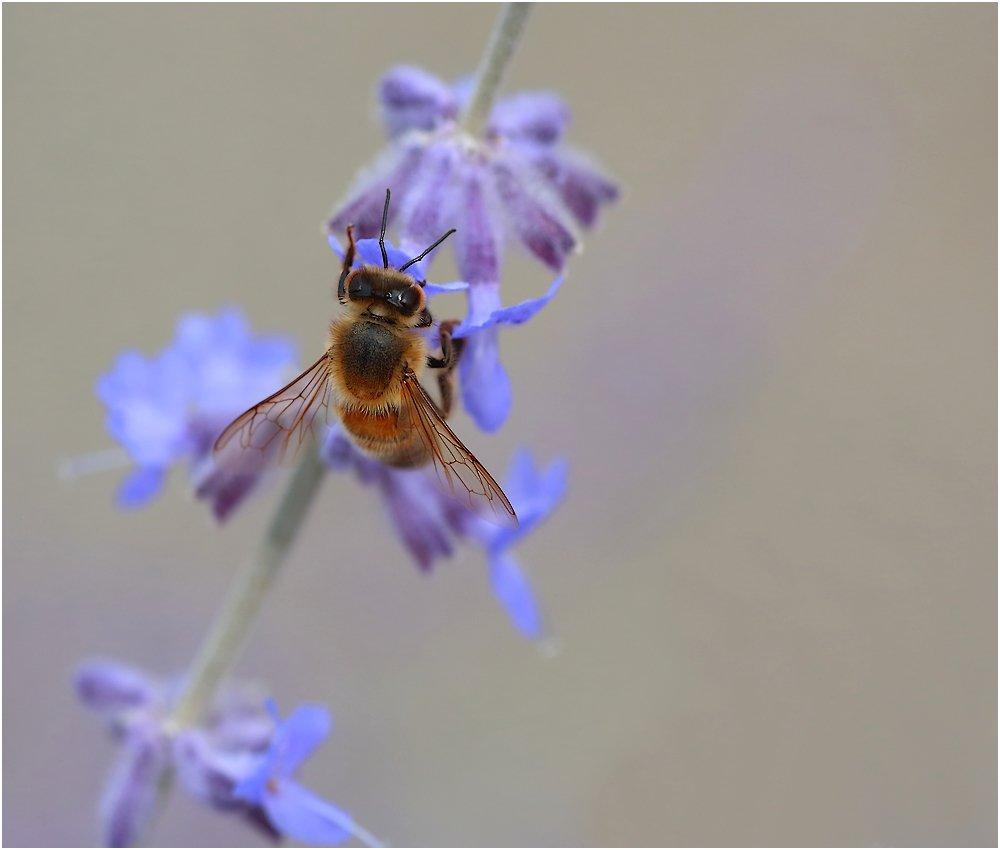 3 abeilles  190808040200379130