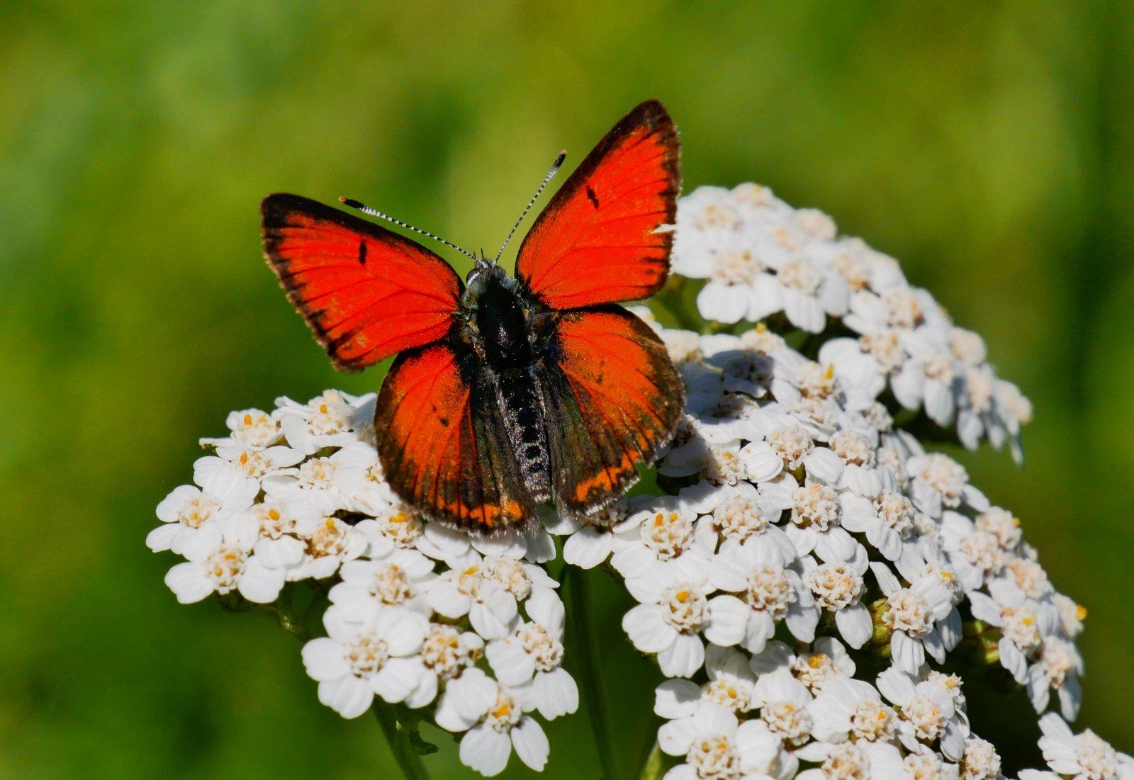 Mes papillons de la s31 + J8/8 + D18/8 + ajout 190808075726265617