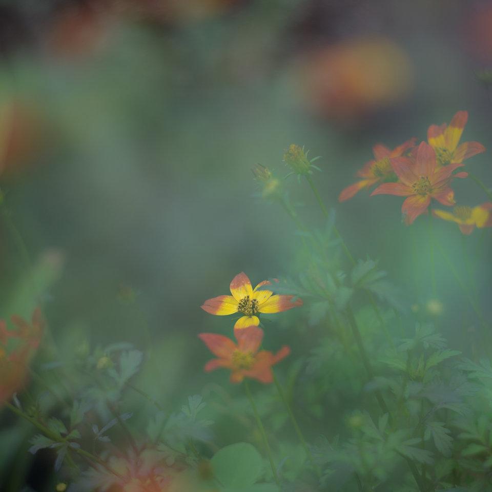 Petites fleurs du jardin 190818120000591682