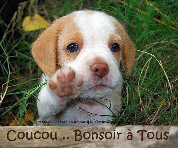 bonsoir_009
