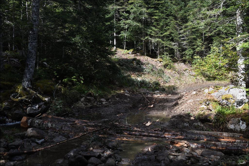 190923062252826383 déforestation dans Evènements