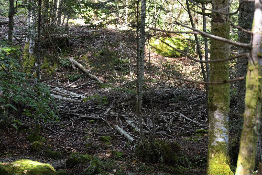 190923062254738719 Massacre forêt dans Libre expression