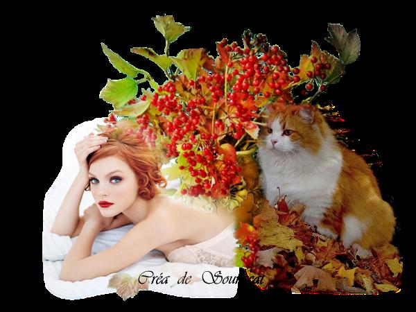 rond rousse et chat