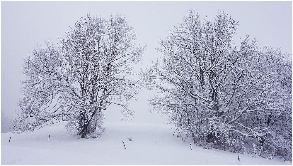 En attendant l'hiver 191006083211950898