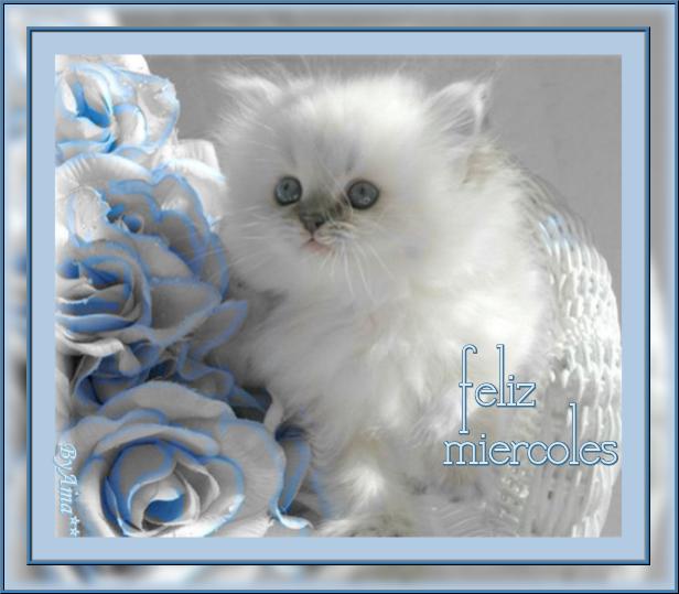 Meme Entre Rosas  191010113400707601