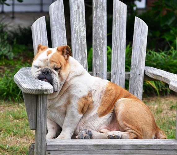 Fatigue-dog-848390_640