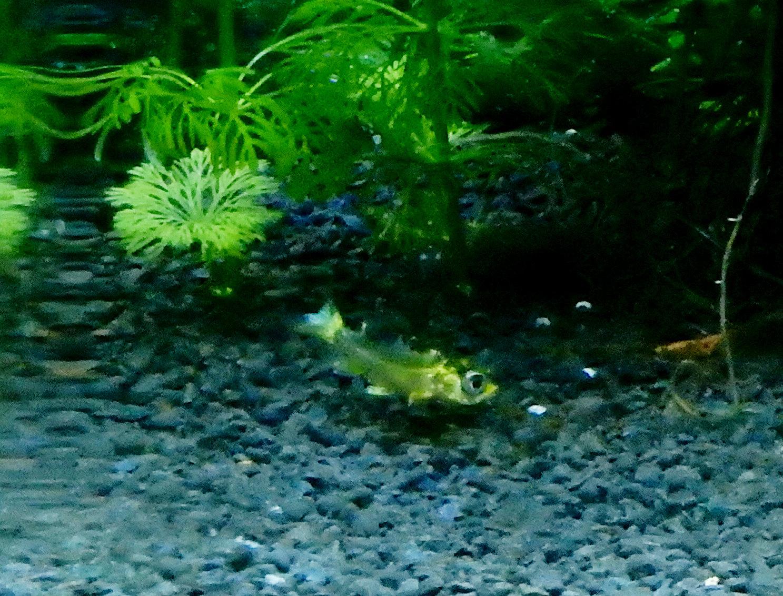 bébé poisson de mon bassin 191114033424639420