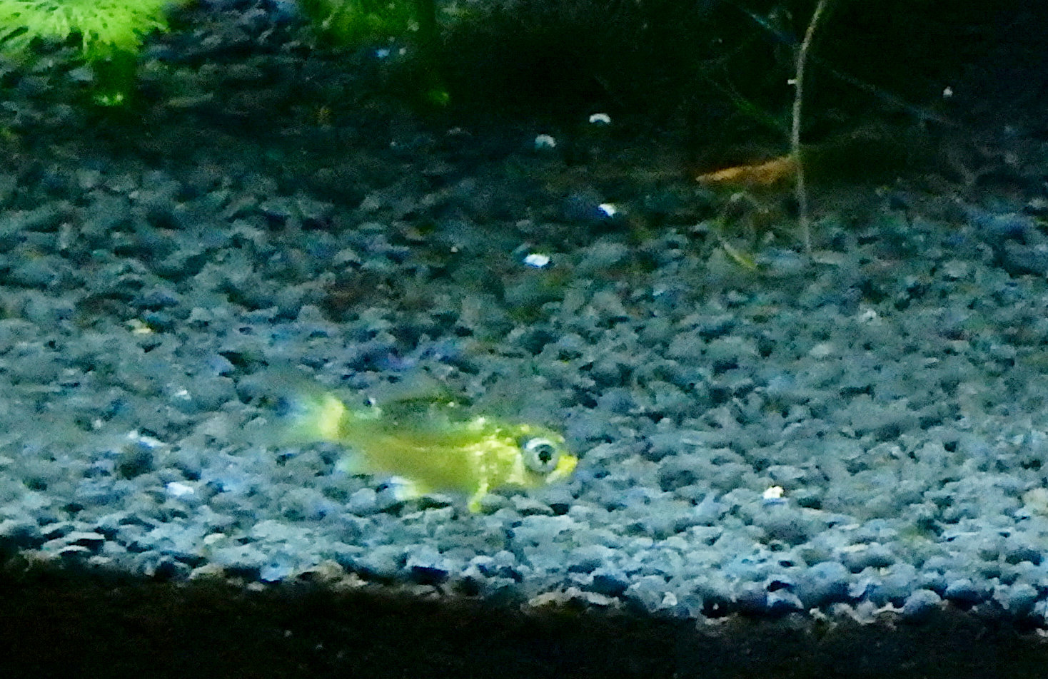 bébé poisson de mon bassin 191114033425101812