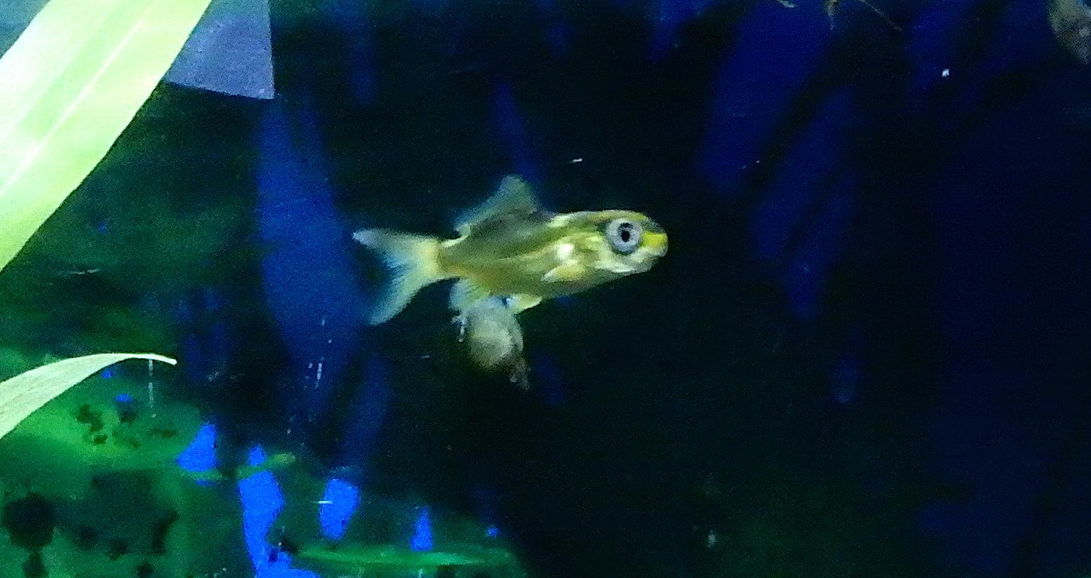 bébé poisson de mon bassin 191114033425937346