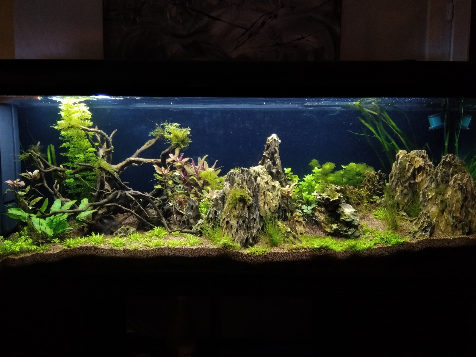 300l brut aquascaping - Page 2 191205080009219217