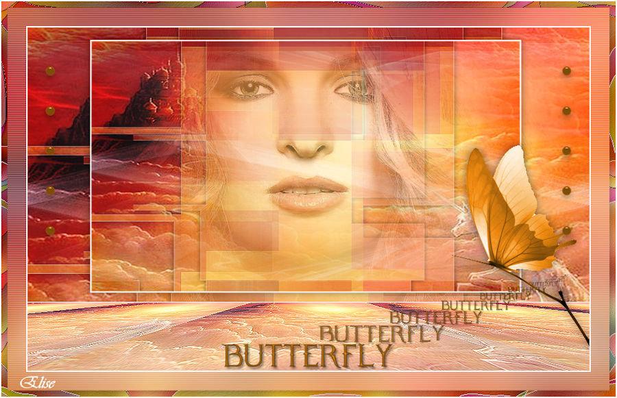 Papillon(Psp) 191209031405103522