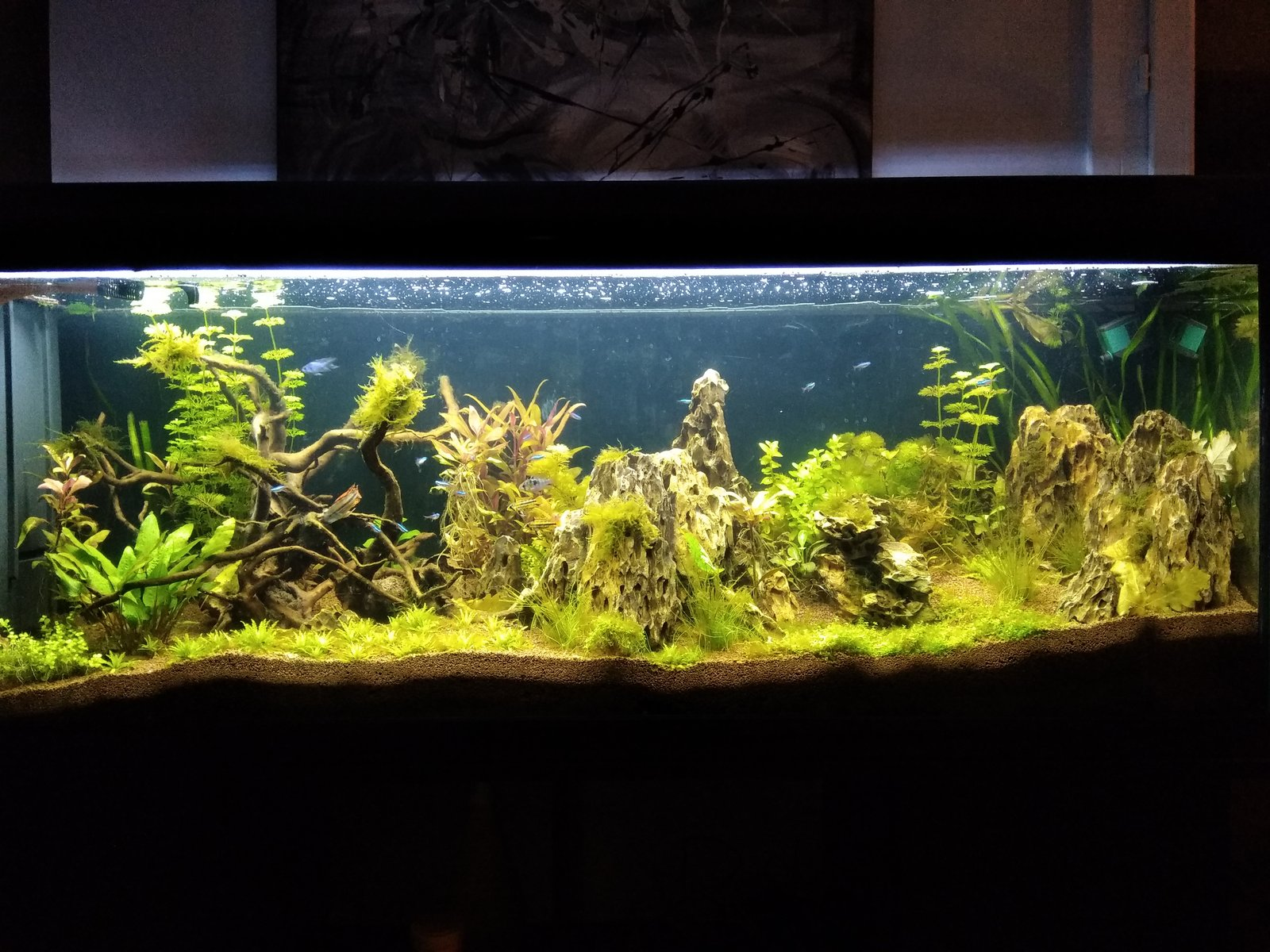 300l brut aquascaping - Page 3 191212100848846354