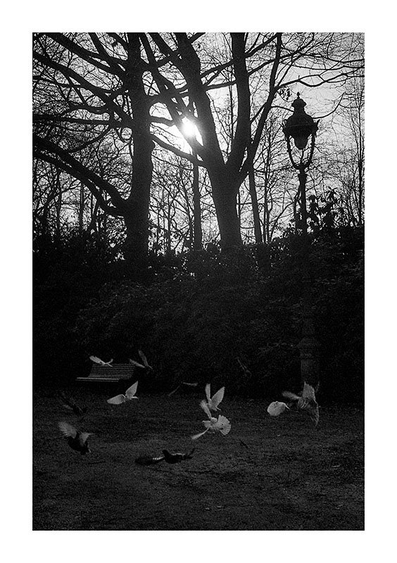 scan contre-jour Thabor pigeons