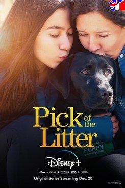 Pick of the Litter - Saison 1