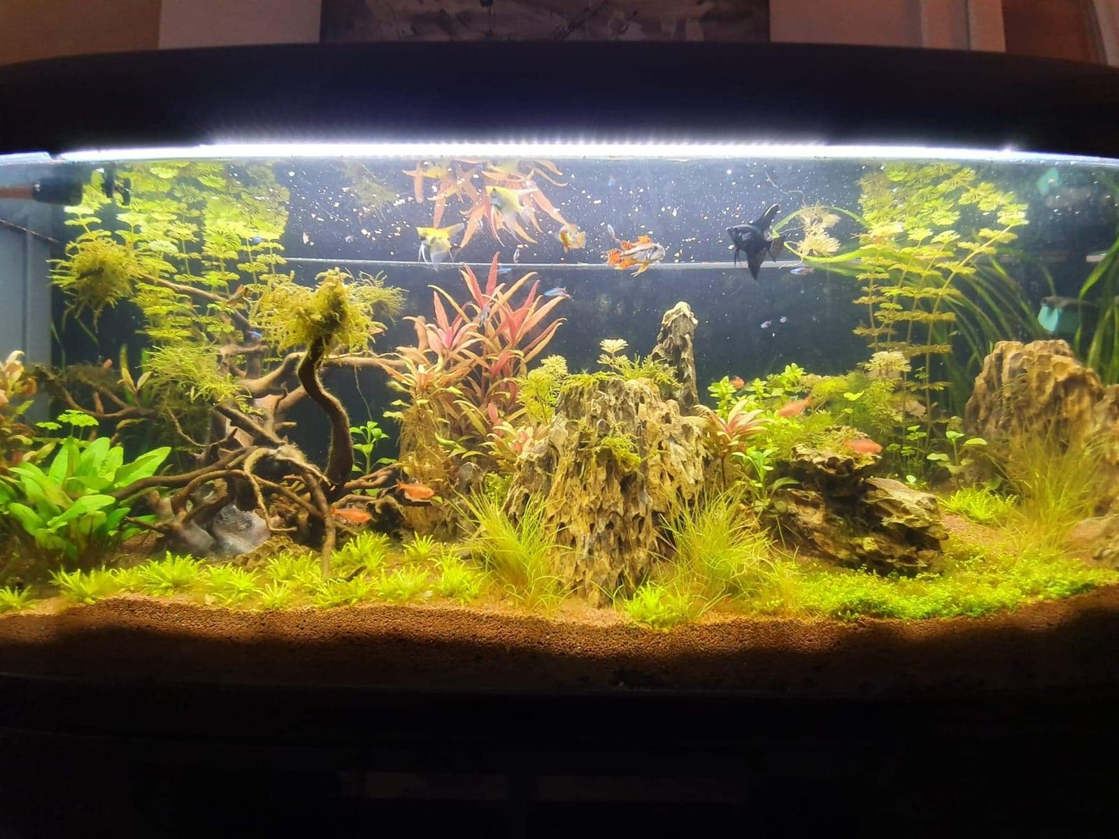 300l brut aquascaping - Page 3 191225020031493173