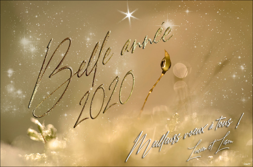 Belle année 2020 ! dans Actualité locale 200101085939803269