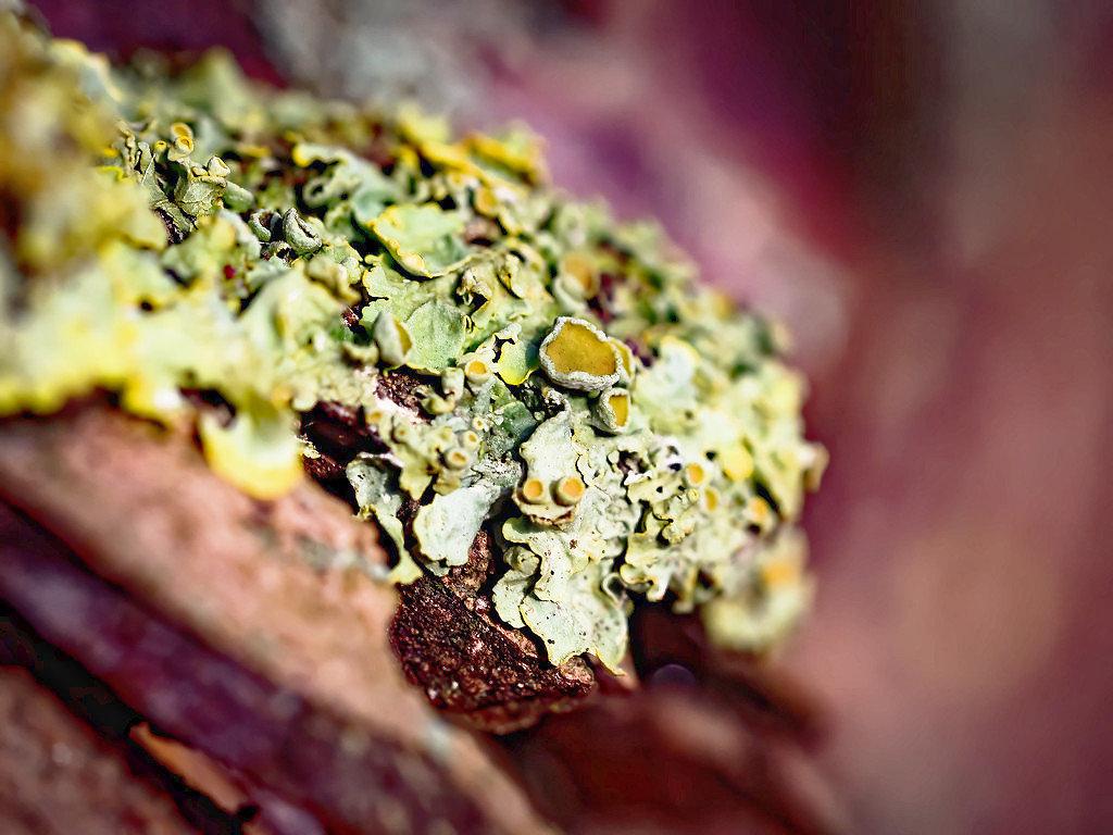 Lichens... 200103043109455248