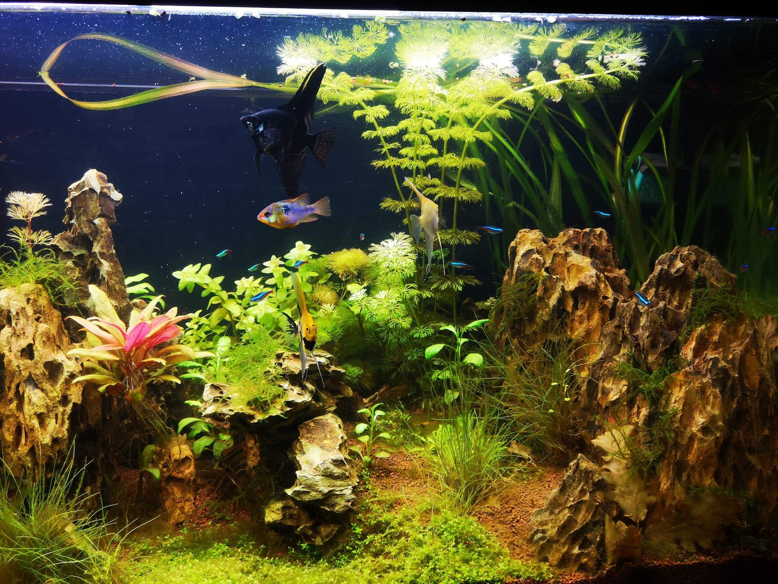 300l brut aquascaping - Page 3 200105065747353688
