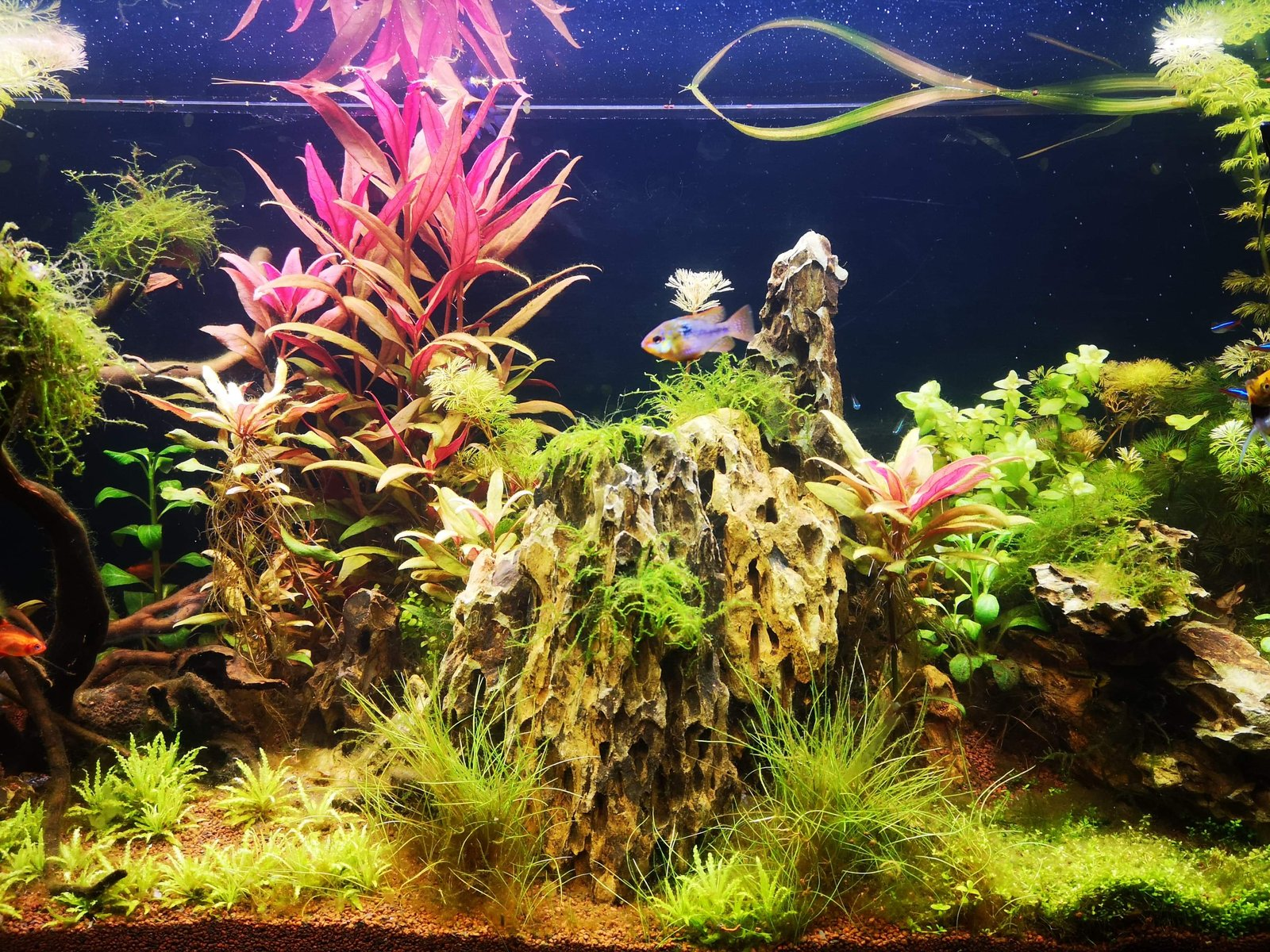 300l brut aquascaping - Page 3 200105065747994517
