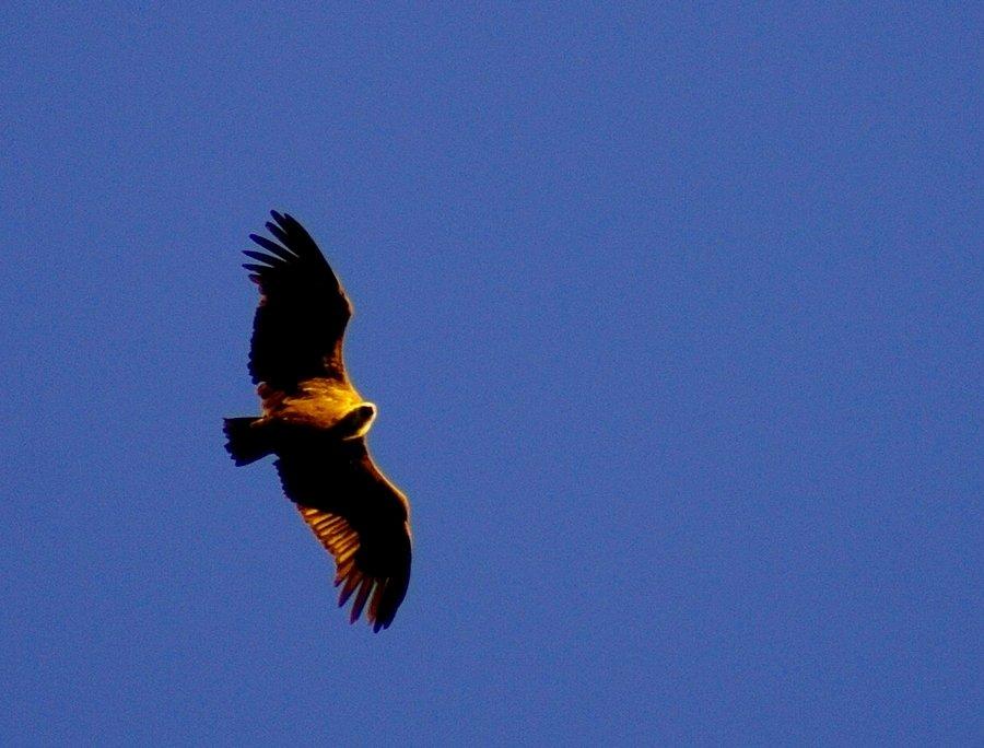 """ L'oiseau de feu"" ... 200109064900413122"