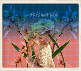 mtfp_456_orchids