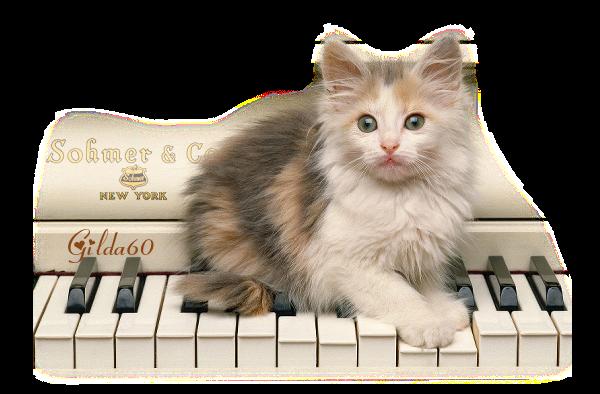 chat de linette gilda