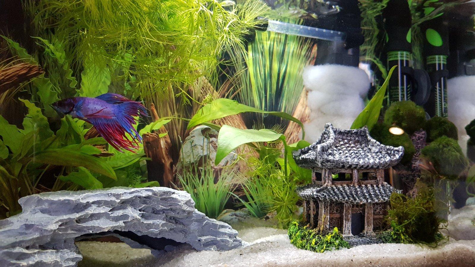 Présentation Mamillum et son petit aquarium 20021503362452298