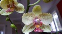 Vous pensez que votre orchidée est malade ? Vous voyez des bestioles ? Vous souhaitez parler d'un produit phyto ? Mini_200217053630303649