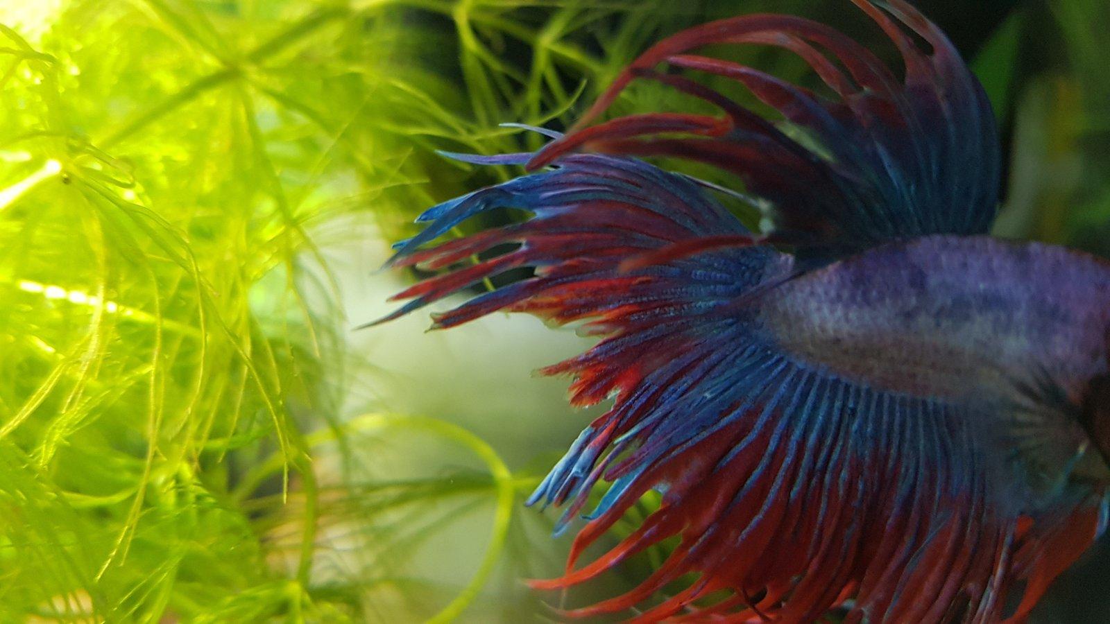 Présentation Mamillum et son petit aquarium 200219110734549043