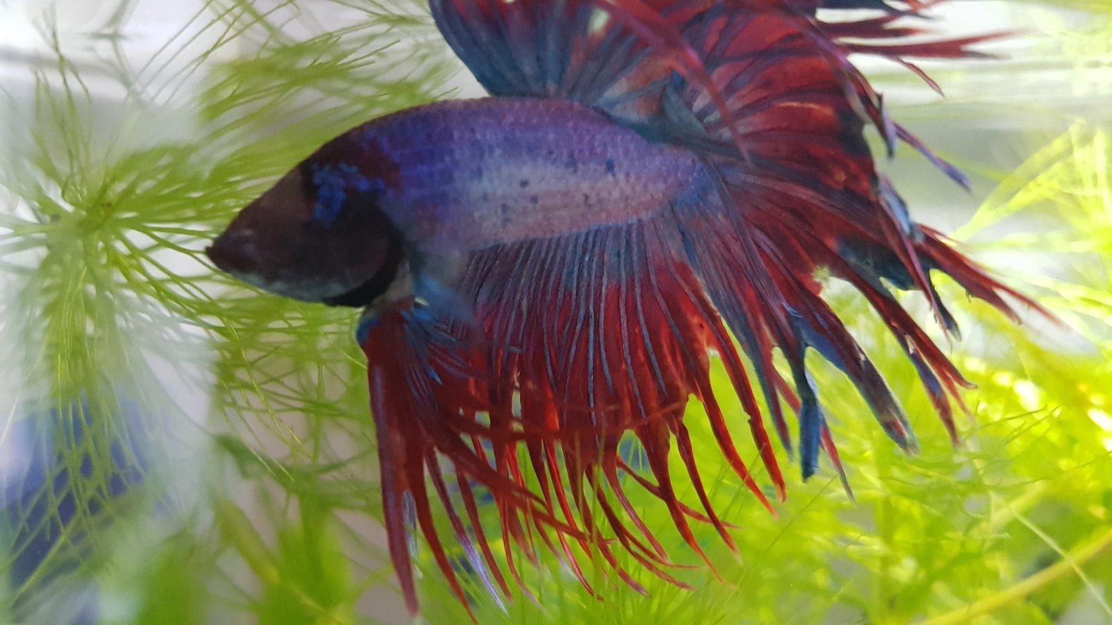 Présentation Mamillum et son petit aquarium 200219110737762584