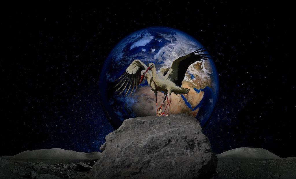 Cigogne sur lune