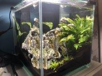 Formation d'algue Mini_200318042321336391