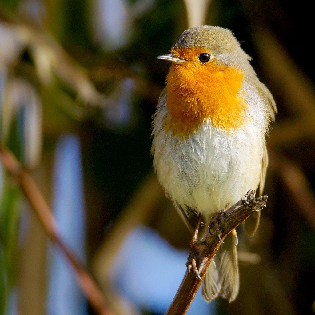 les oiseaux de Camaroney ( mise a jour du 19.03.2020) - Page 20 200319065400660408