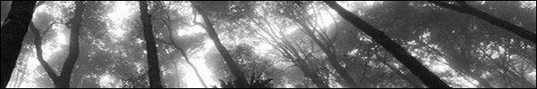 Le chemin de l'Ombre | Partie I [Pv. Tenzin/Libre] 200328053606350633