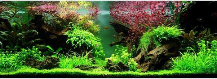 paysage-aquatique-n80-tropica