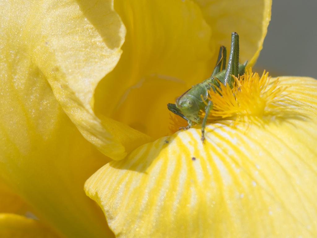 Macros/  proxi/  insectes  - Page 32 200425030641627682