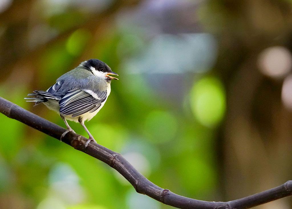 les oiseaux de Camaroney ( mise a jour du 14.05.2020) - Page 22 200503033419230434