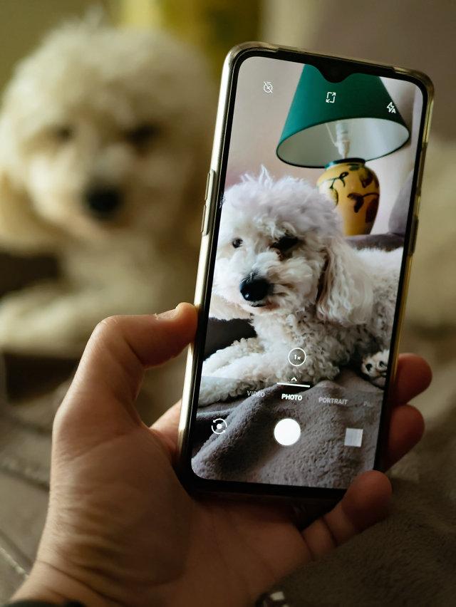Mon chien et le portable 20050906385942149