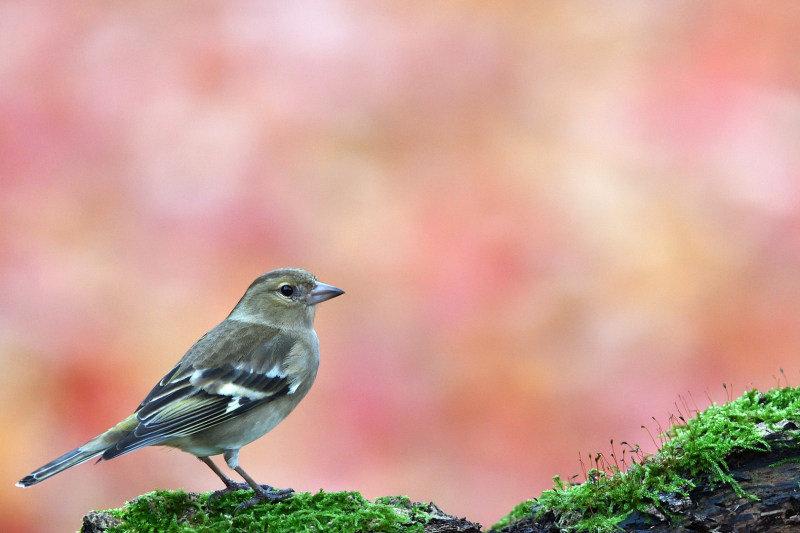 191125_009_oiseaux_1080_01