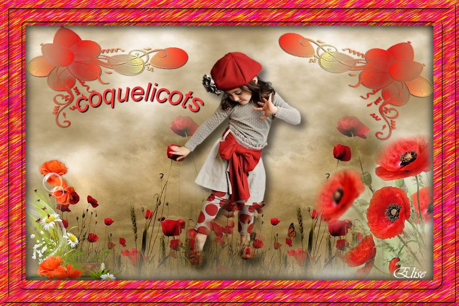 Coquelicots   ( psp) 200512044423378462