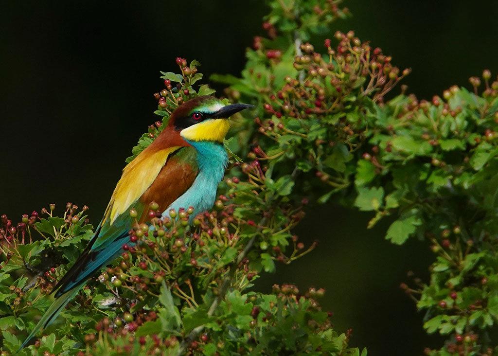 les oiseaux de Camaroney ( mise a jour du 14.05.2020) - Page 22 200514022042593439