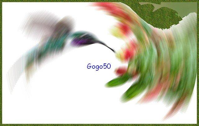 gogo50_colibri