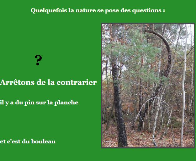 Etager demi. Coeur - Page 2 200624121103865629
