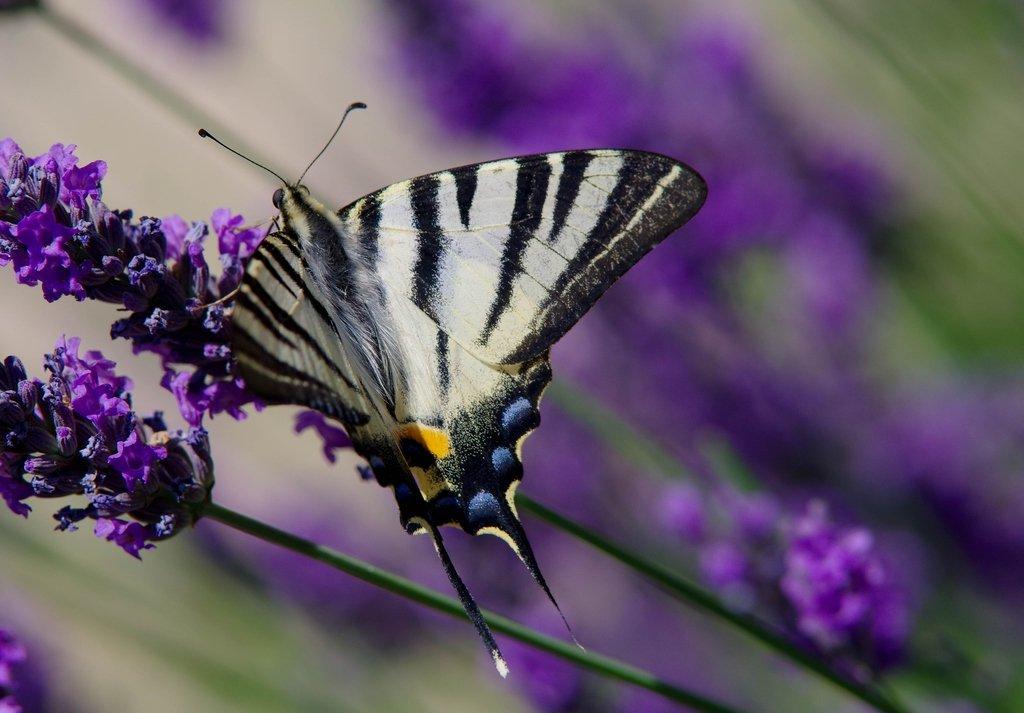 Macros/  proxi/  insectes  - Page 2 200701030318703348