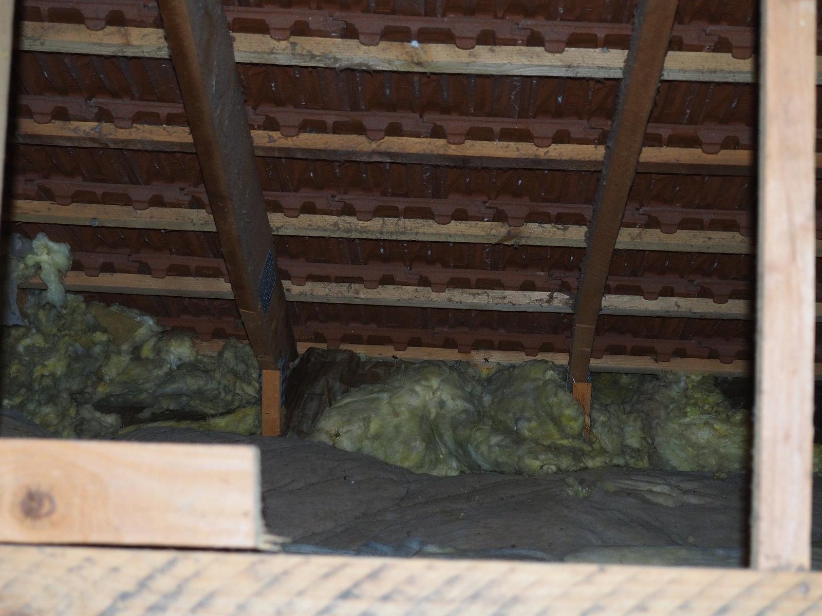 Guêpes (Frelons ?) sous toiture, laine de verre 200715051452324316