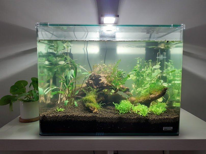 retour à l'aquario avec un scaper tank 55 L  200715100024455489
