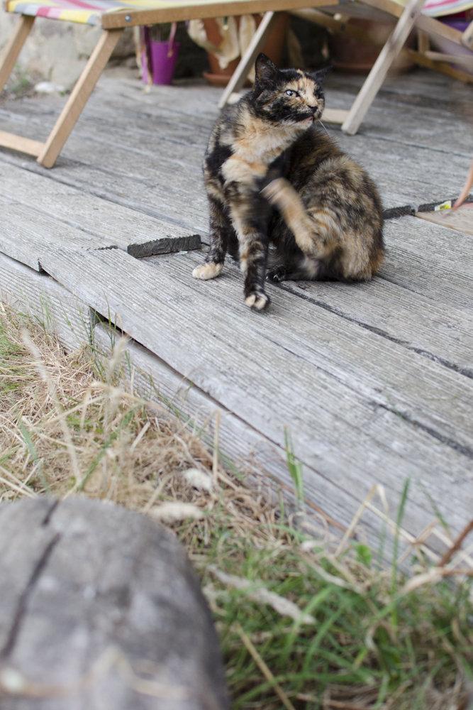Merguez, femelle type européenne écaille de tortue née  - Page 4 200802102707675695