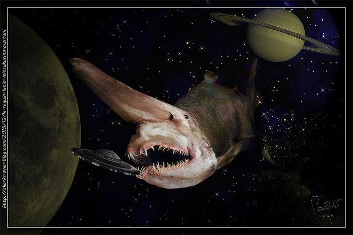 le Requin Lutin