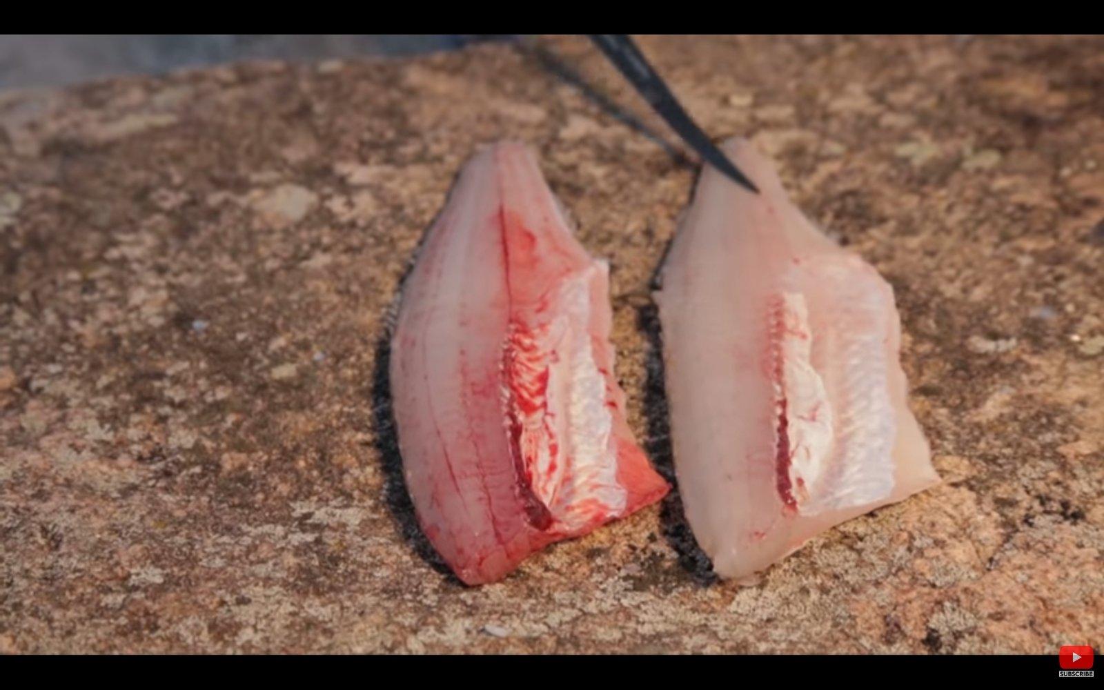 Le sang des poissons est-il kasher ? 200907042226141943