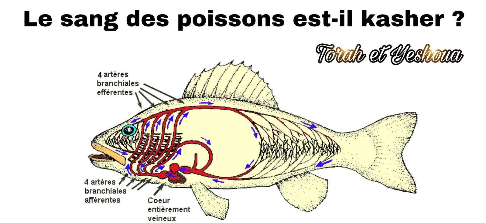 Le sang des poissons est-il kasher ? 20090704495475523